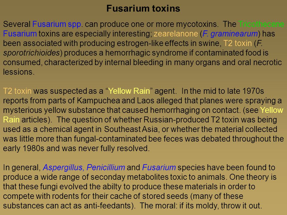 Fusarium toxins Several Fusarium spp.can produce one or more mycotoxins.