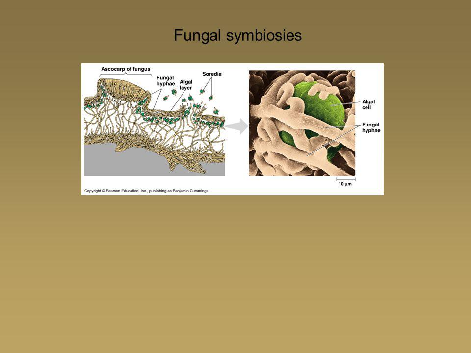 Fungal symbiosies