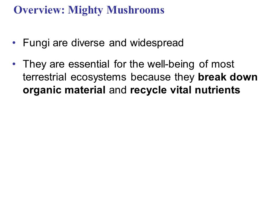 Overview: Mighty Mushrooms Fungi are diverse and widespread They are essential for the well-being of most terrestrial ecosystems because they break do