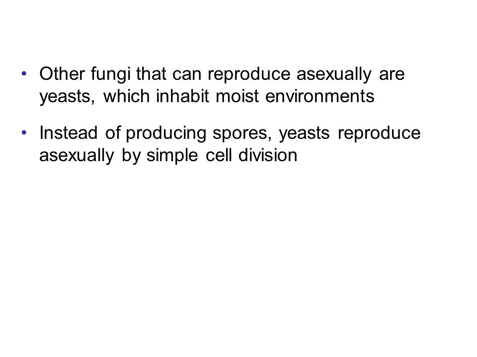 Other fungi that can reproduce asexually are yeasts, which inhabit moist environments Instead of producing spores, yeasts reproduce asexually by simpl