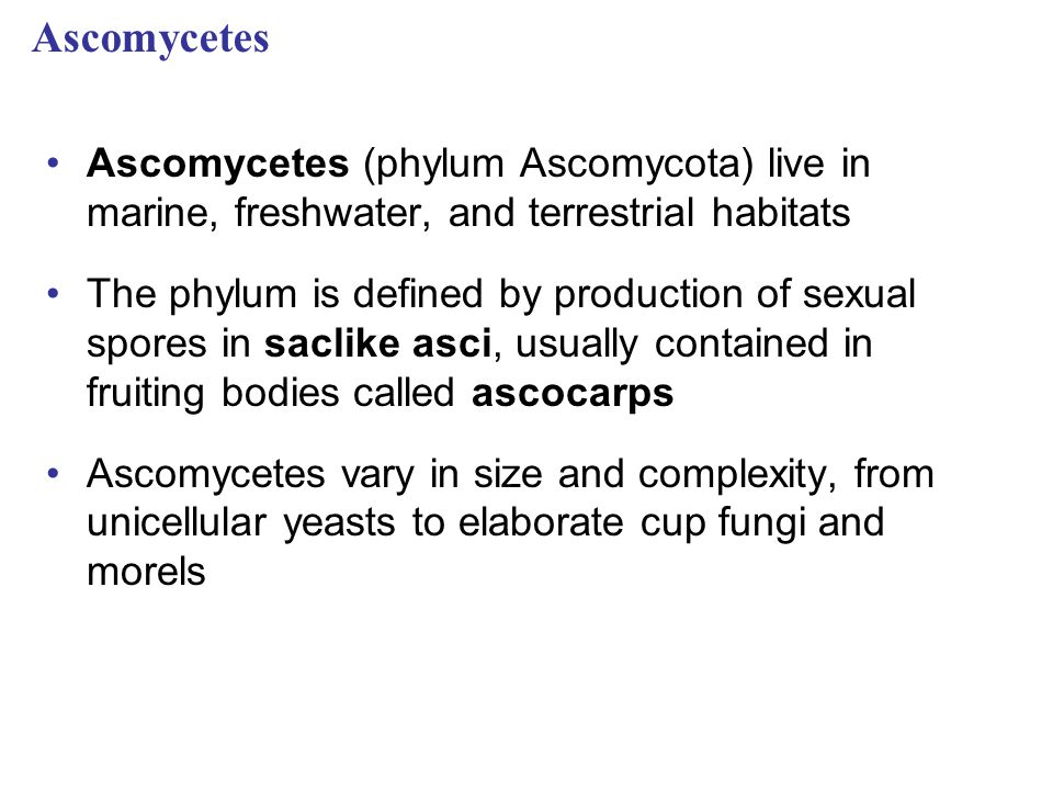Ascomycetes Ascomycetes (phylum Ascomycota) live in marine, freshwater, and terrestrial habitats The phylum is defined by production of sexual spores