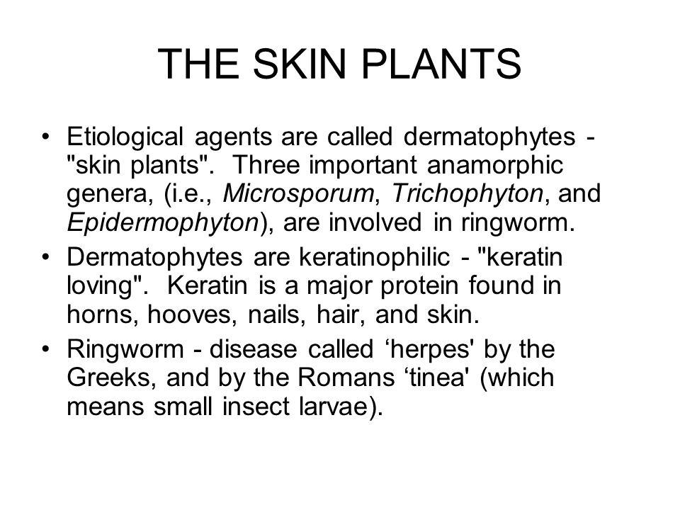 DERMATOPHYTES Trichophyton species The word trichophyton literally means hair plant .