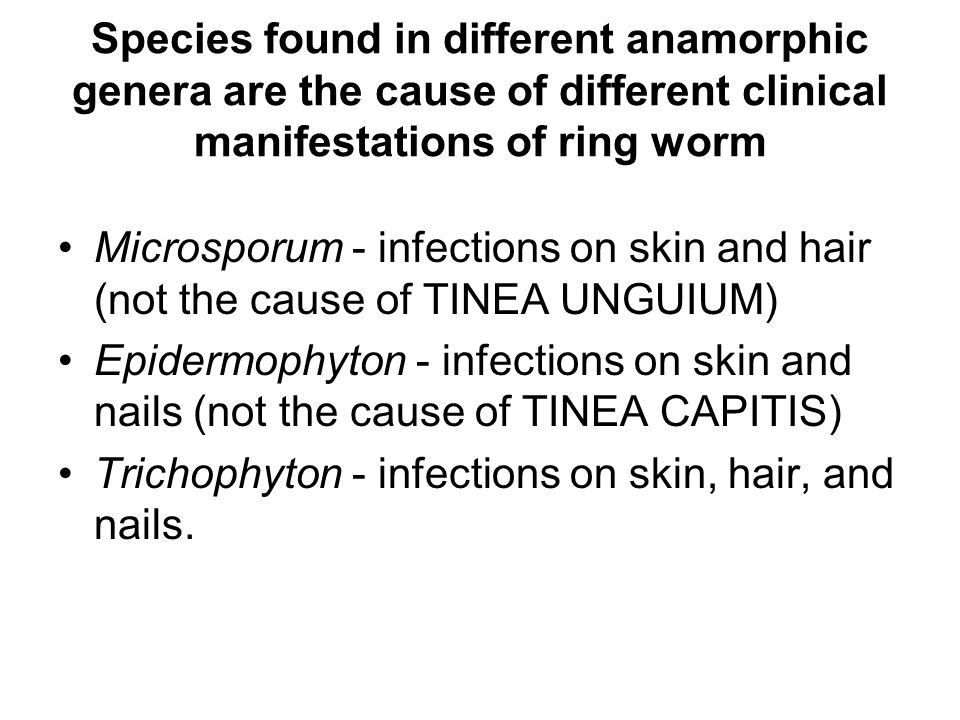 DERMATOPHYTES Trichophyton rubrum Infects nails and smooth skin (rarely found on hair).