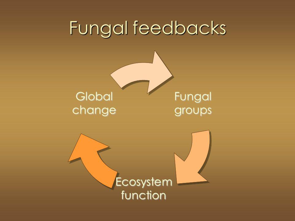 Fungal feedbacks Fungalgroups Ecosystemfunction Globalchange