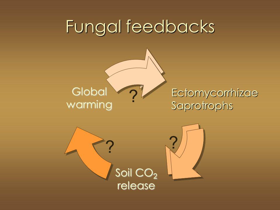 Fungal feedbacks EctomycorrhizaeSaprotrophs