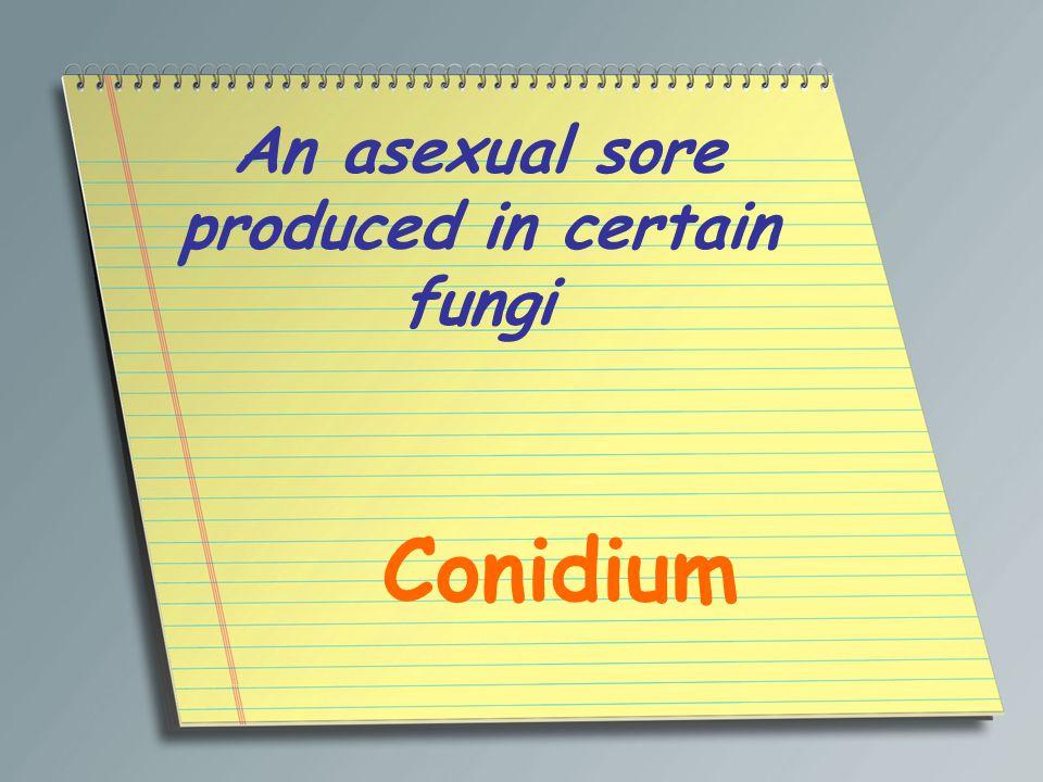An asexual sore produced in certain fungi Conidium