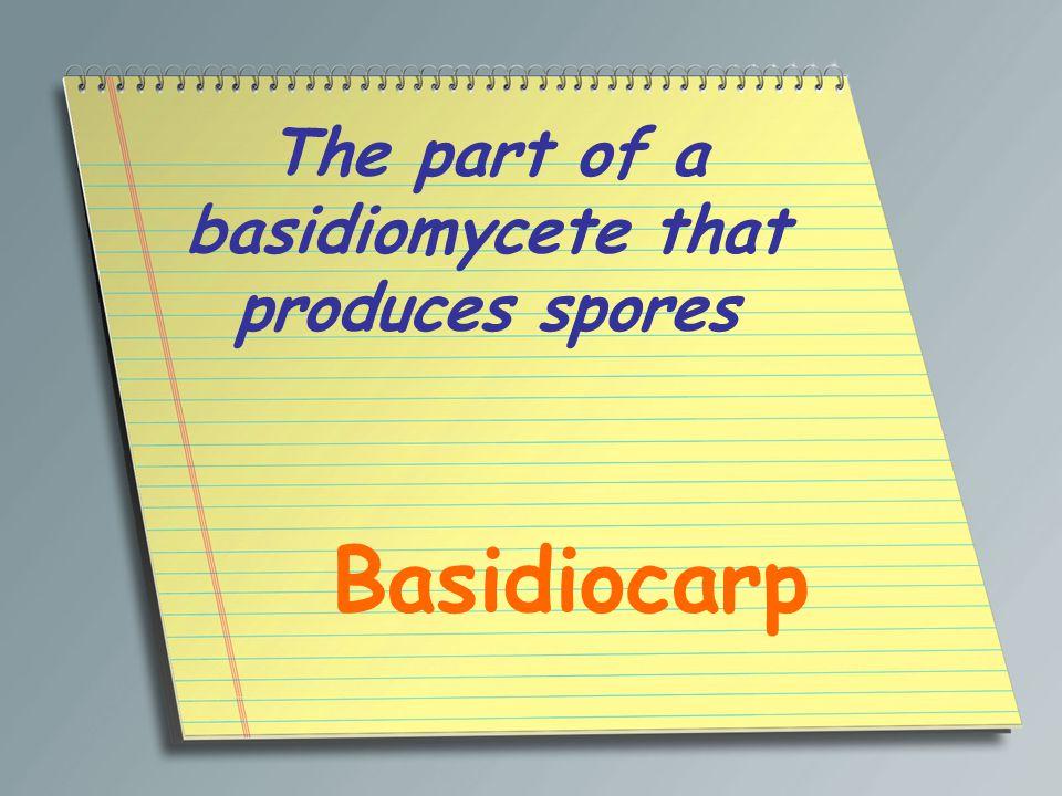 The part of a basidiomycete that produces spores Basidiocarp