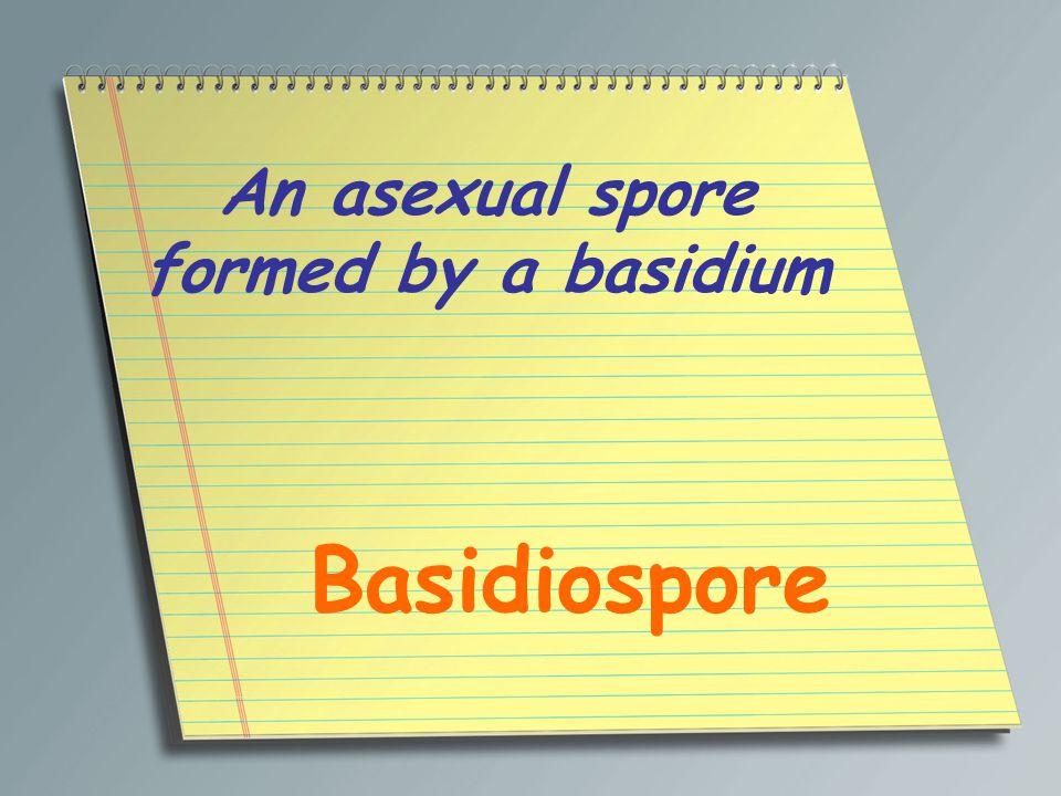 An asexual spore formed by a basidium Basidiospore