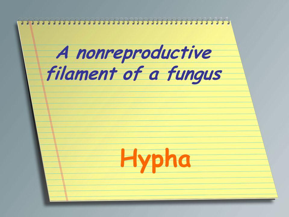 A nonreproductive filament of a fungus Hypha