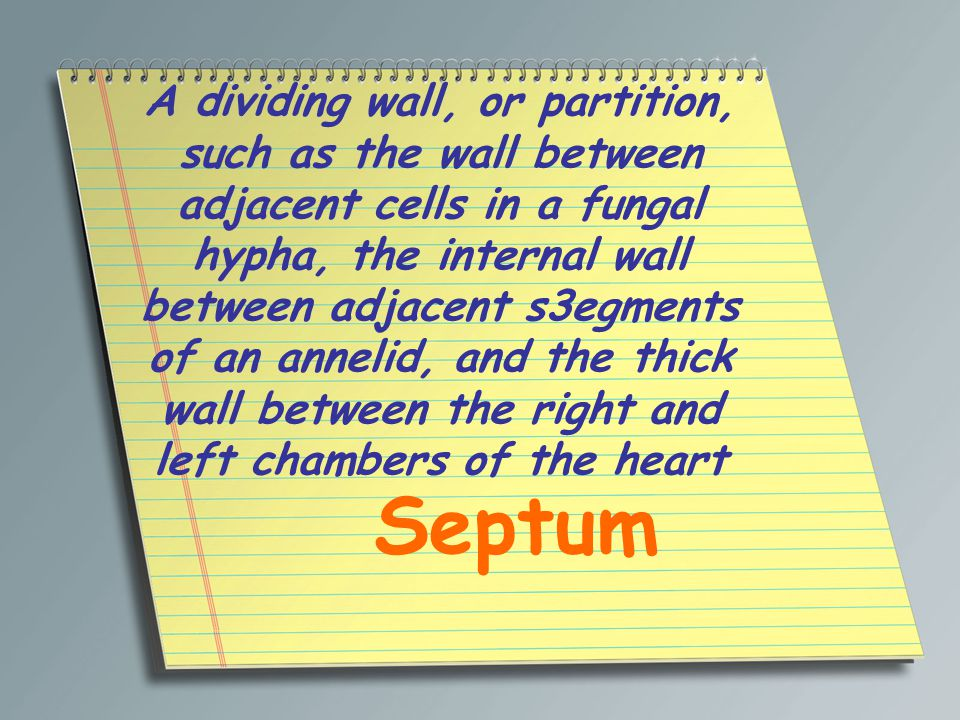 A dividing wall, or partition, such as the wall between adjacent cells in a fungal hypha, the internal wall between adjacent s3egments of an annelid, and the thick wall between the right and left chambers of the heart Septum