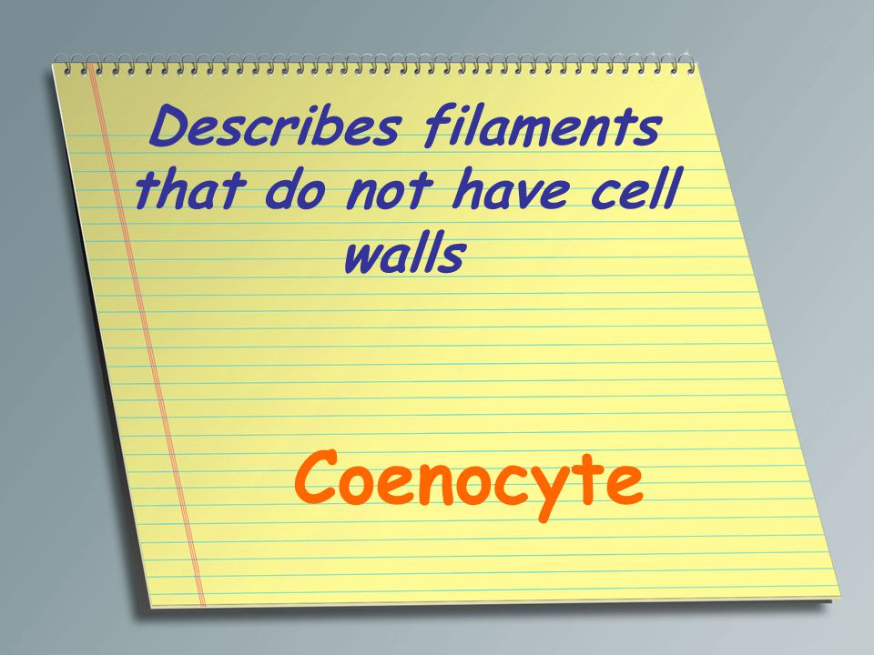Describes filaments that do not have cell walls Coenocyte