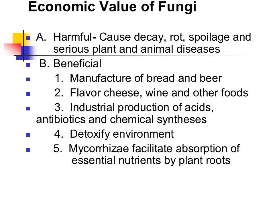 Economic Value of Fungi A.Harmful- Cause decay, rot, spoilage and serious plant and animal diseases B.Beneficial 1.