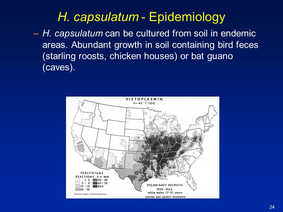 24 H. capsulatum - Epidemiology –H. capsulatum can be cultured from soil in endemic areas. Abundant growth in soil containing bird feces (starling roo