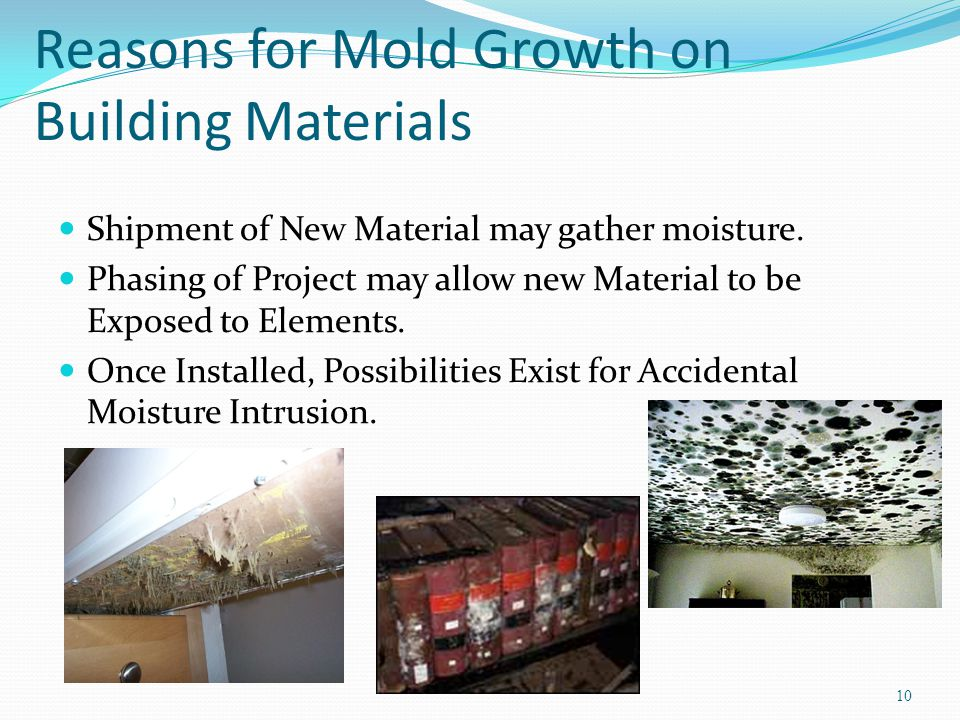 Reasons for Mold Growth on Building Materials Shipment of New Material may gather moisture.