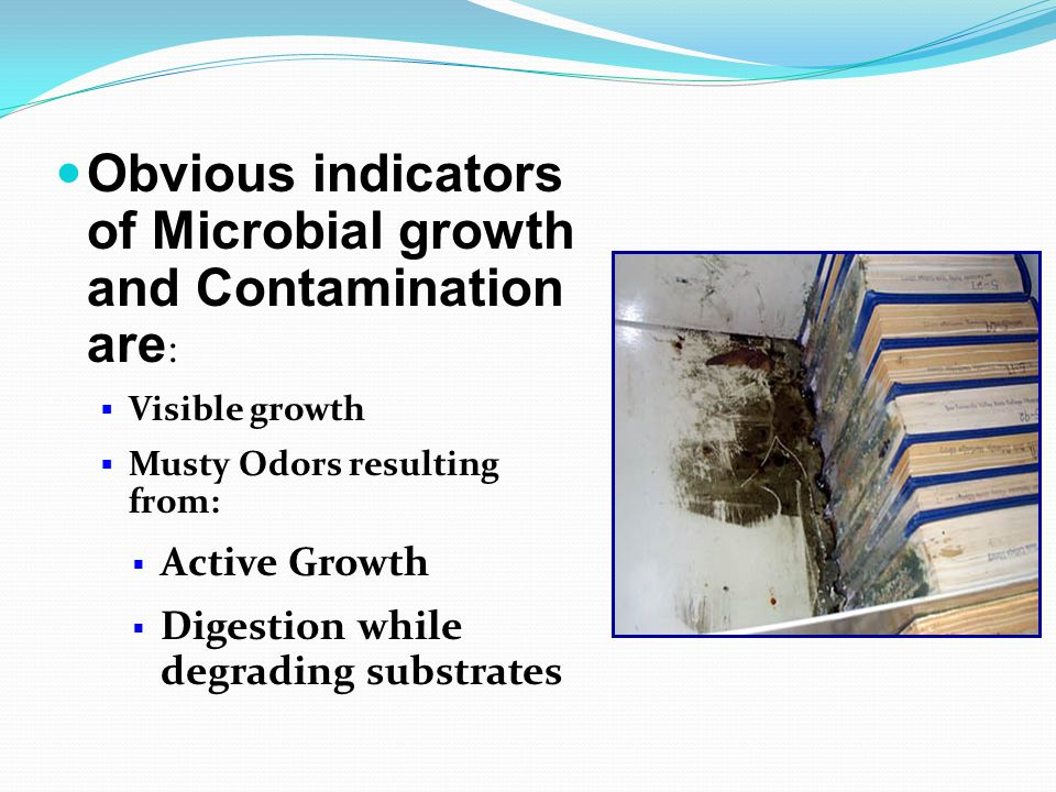 Obvious indicators of Microbial growth and Contamination are :  Visible growth  Musty Odors resulting from:  Active Growth  Digestion while degrading substrates