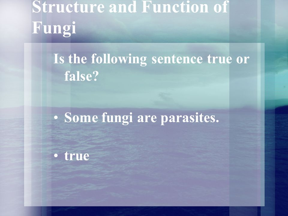 Structure and Function of Fungi Which group of fungi are not multicellular? Yeasts