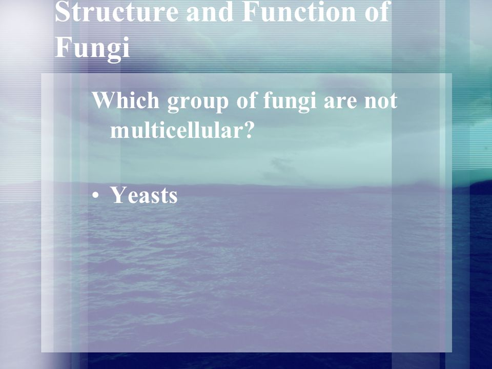 Structure and Function of Fungi What are hyphae.