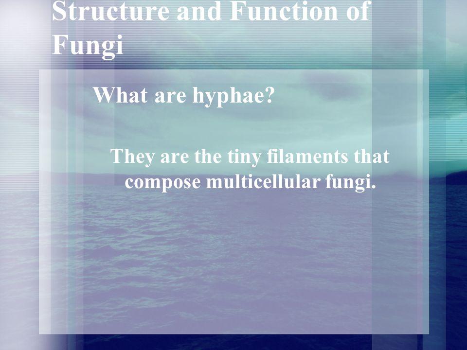 Reproduction of Fungi Where are sporangia found in a fungus.
