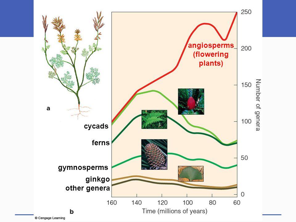 ginkgo other genera gymnosperms ferns cycads angiosperms (flowering plants)