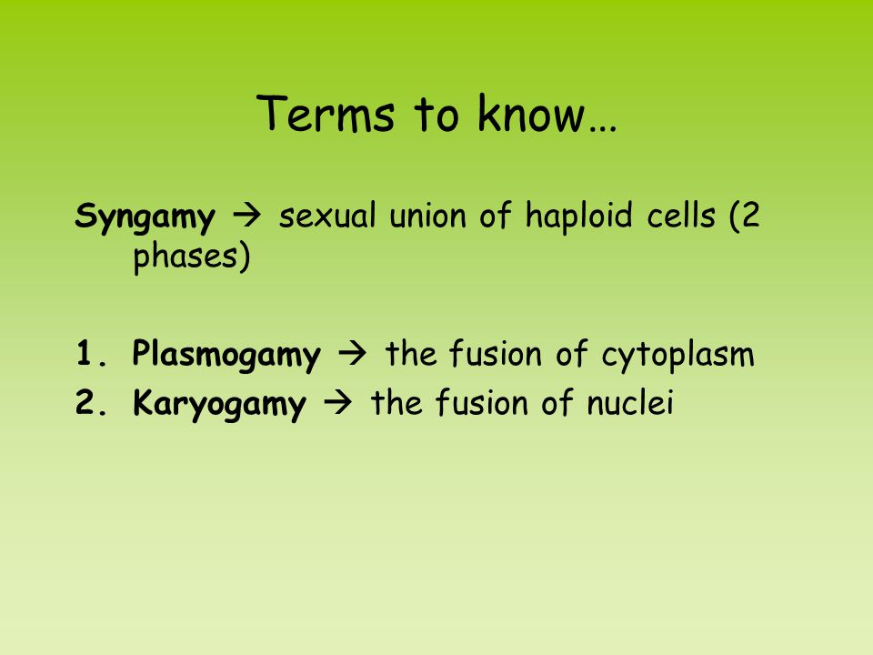 Terms to know… Syngamy  sexual union of haploid cells (2 phases) 1.Plasmogamy  the fusion of cytoplasm 2.Karyogamy  the fusion of nuclei