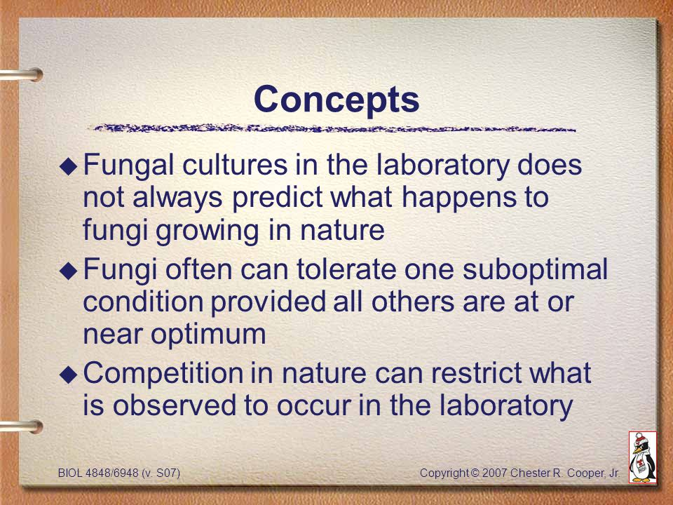 BIOL 4848/6948 (v. S07) Copyright © 2007 Chester R. Cooper, Jr. Concepts u Fungal cultures in the laboratory does not always predict what happens to f