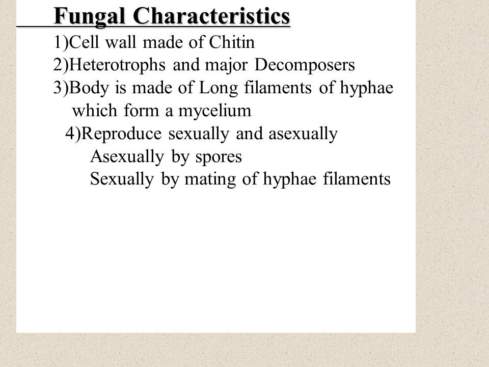 Fungal Characteristics 1)Cell wall made of Chitin 2)Heterotrophs and major Decomposers 3)Body is made of Long filaments of hyphae which form a mycelium 4)Reproduce sexually and asexually Asexually by spores Sexually by mating of hyphae filaments