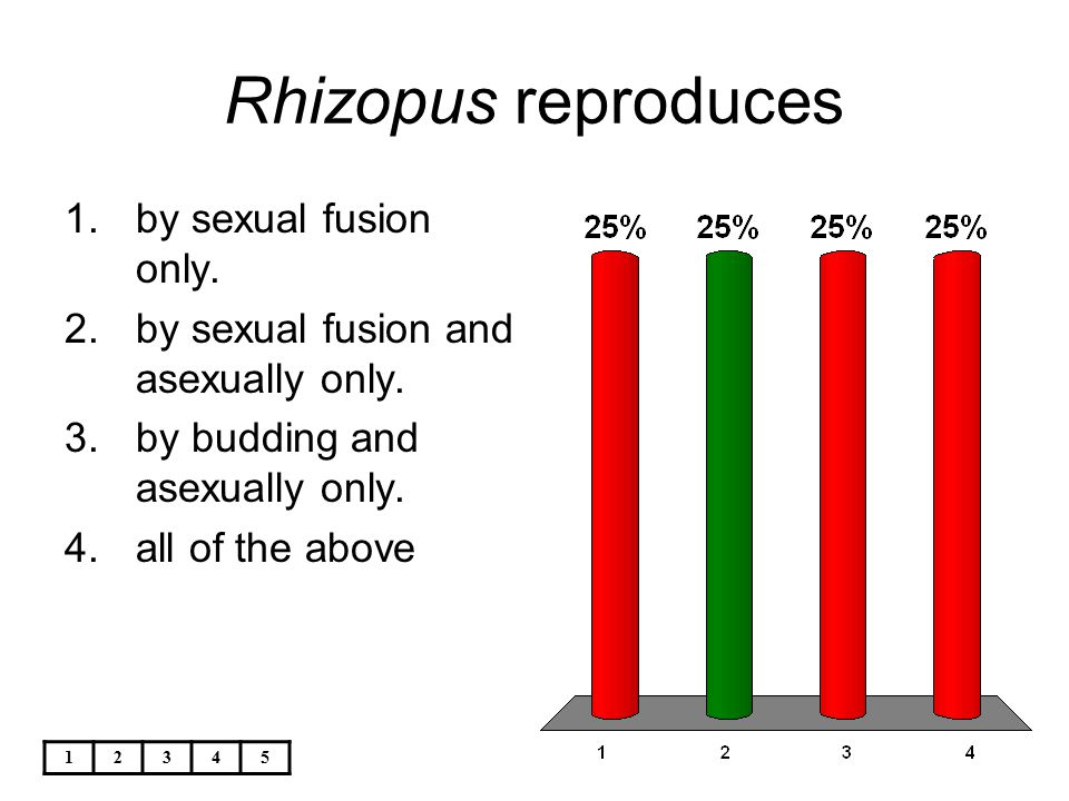 12345 Rhizopus reproduces 1.by sexual fusion only. 2.by sexual fusion and asexually only. 3.by budding and asexually only. 4.all of the above