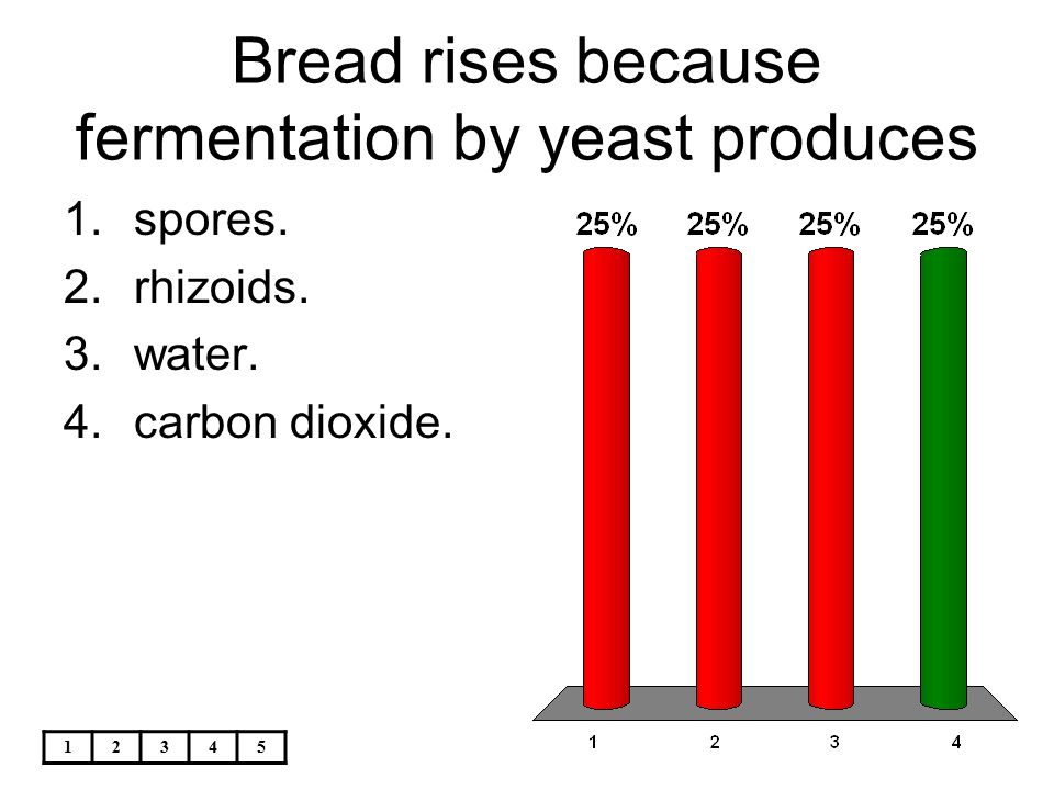 12345 Bread rises because fermentation by yeast produces 1.spores. 2.rhizoids. 3.water. 4.carbon dioxide.