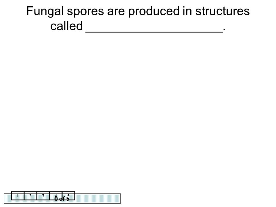 0 of 5 12345 Fungal spores are produced in structures called ____________________.