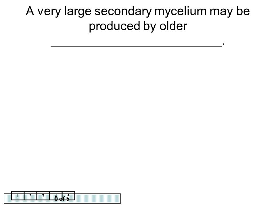 0 of 5 12345 A very large secondary mycelium may be produced by older _________________________.