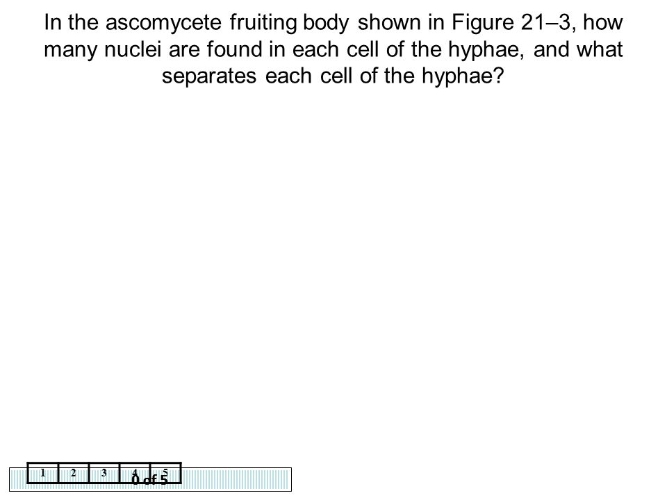 0 of 5 12345 In the ascomycete fruiting body shown in Figure 21–3, how many nuclei are found in each cell of the hyphae, and what separates each cell