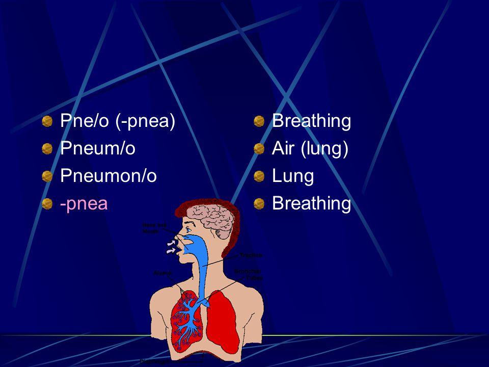 Pne/o (-pnea) Pneum/o Pneumon/o -pnea Breathing Air (lung) Lung Breathing
