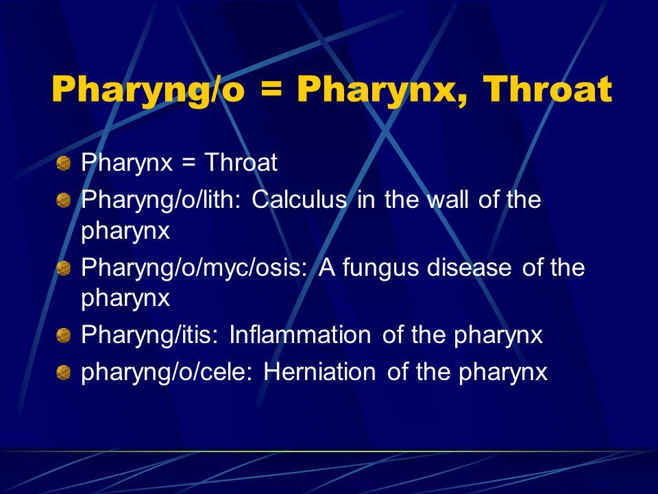 Pharyng/o = Pharynx, Throat Pharynx = Throat Pharyng/o/lith: Calculus in the wall of the pharynx Pharyng/o/myc/osis: A fungus disease of the pharynx Pharyng/itis: Inflammation of the pharynx pharyng/o/cele: Herniation of the pharynx