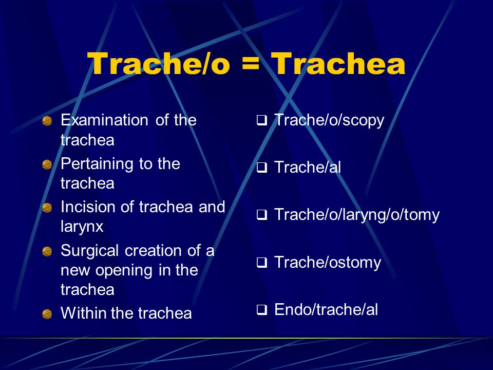 Trache/o = Trachea Examination of the trachea Pertaining to the trachea Incision of trachea and larynx Surgical creation of a new opening in the trach