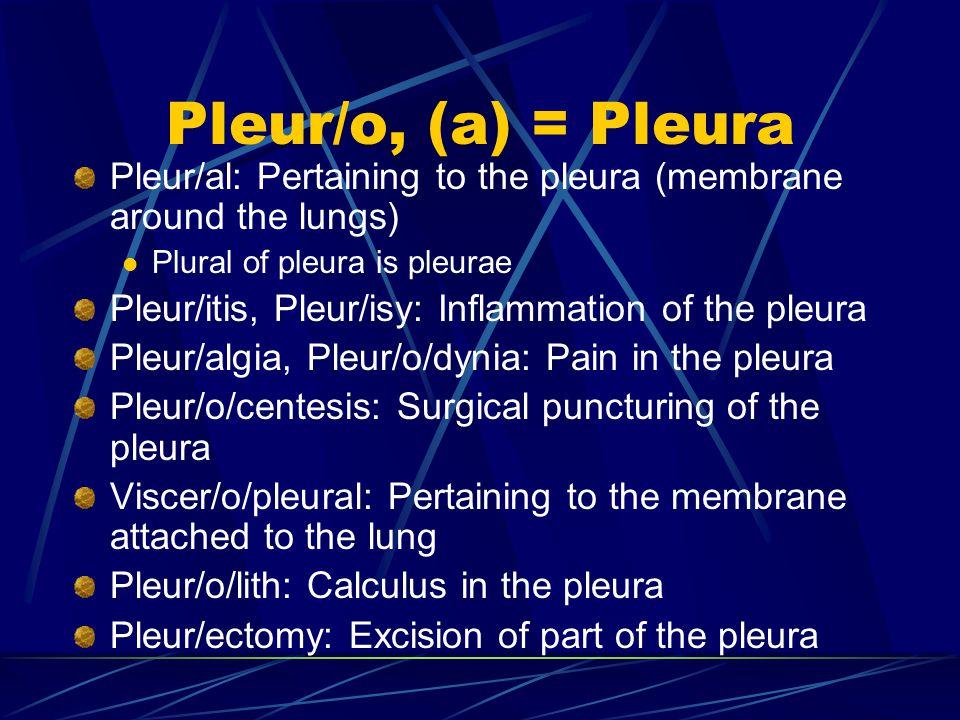 Pleur/o, (a) = Pleura Pleur/al: Pertaining to the pleura (membrane around the lungs) Plural of pleura is pleurae Pleur/itis, Pleur/isy: Inflammation of the pleura Pleur/algia, Pleur/o/dynia: Pain in the pleura Pleur/o/centesis: Surgical puncturing of the pleura Viscer/o/pleural: Pertaining to the membrane attached to the lung Pleur/o/lith: Calculus in the pleura Pleur/ectomy: Excision of part of the pleura