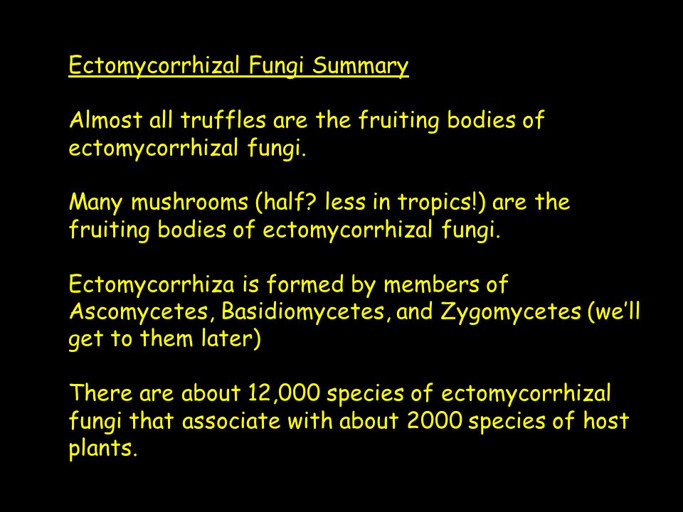 Ectomycorrhizal Fungi Summary Almost all truffles are the fruiting bodies of ectomycorrhizal fungi. Many mushrooms (half? less in tropics!) are the fr