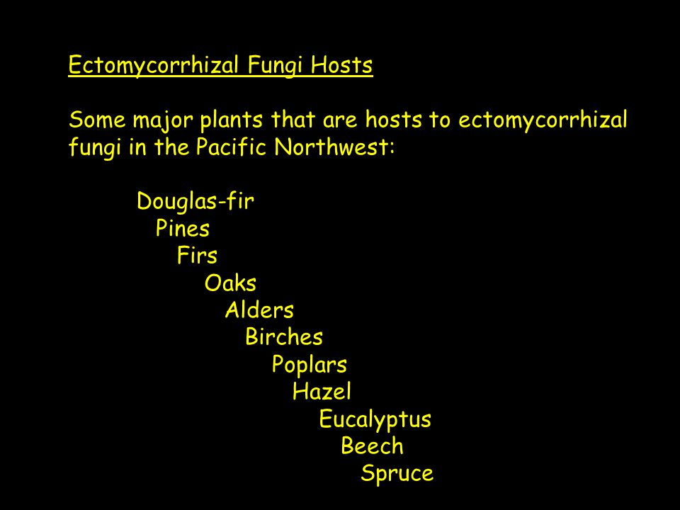 Ectomycorrhizal Fungi Hosts Some major plants that are hosts to ectomycorrhizal fungi in the Pacific Northwest: Douglas-fir Pines Firs Oaks Alders Birches Poplars Hazel Eucalyptus Beech Spruce