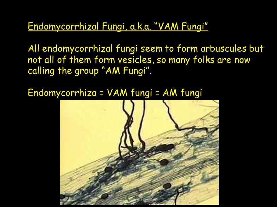Endomycorrhizal Fungi, a.k.a.