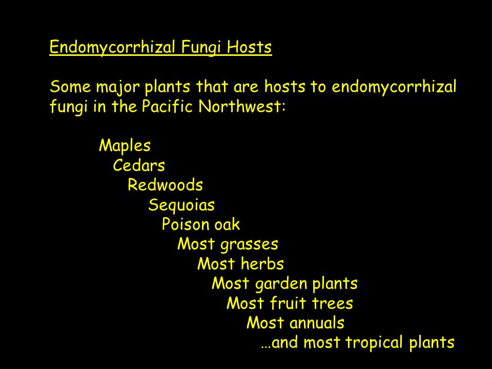 Endomycorrhizal Fungi Hosts Some major plants that are hosts to endomycorrhizal fungi in the Pacific Northwest: Maples Cedars Redwoods Sequoias Poison oak Most grasses Most herbs Most garden plants Most fruit trees Most annuals …and most tropical plants