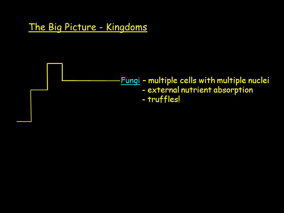 The Big Picture - Kingdoms Fungi – multiple cells with multiple nuclei - external nutrient absorption - truffles!