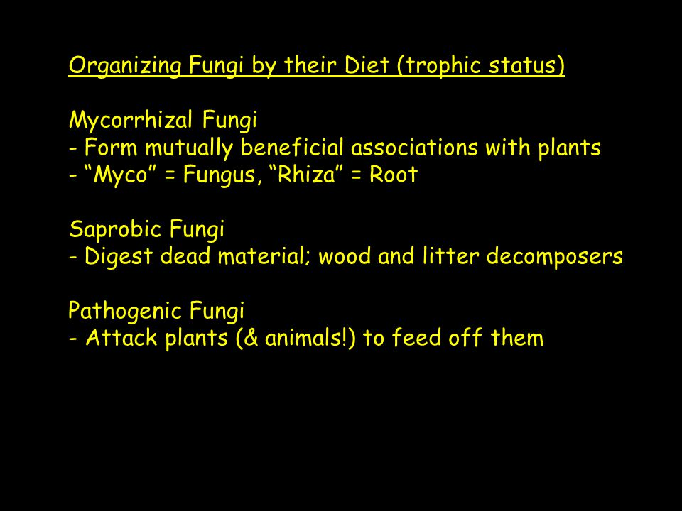 Organizing Fungi by their Diet (trophic status) Mycorrhizal Fungi - Form mutually beneficial associations with plants - Myco = Fungus, Rhiza = Root Saprobic Fungi - Digest dead material; wood and litter decomposers Pathogenic Fungi - Attack plants (& animals!) to feed off them