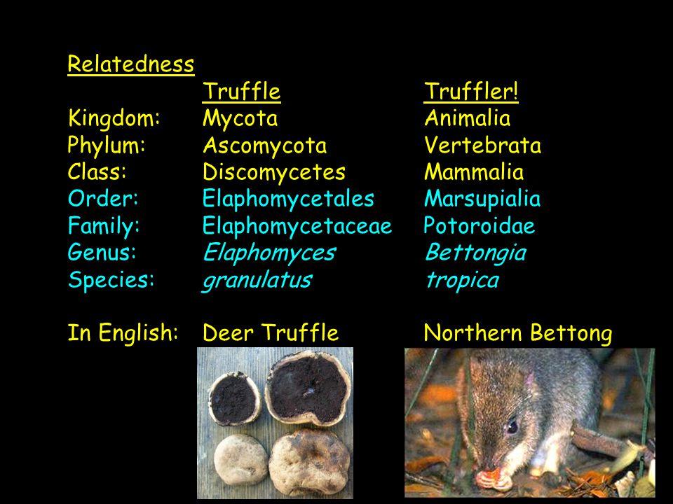 Relatedness Truffle Truffler.