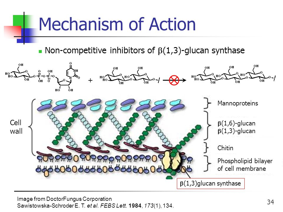 34 Mechanism of Action Image from DoctorFungus Corporation Sawistowska-Schroder E.