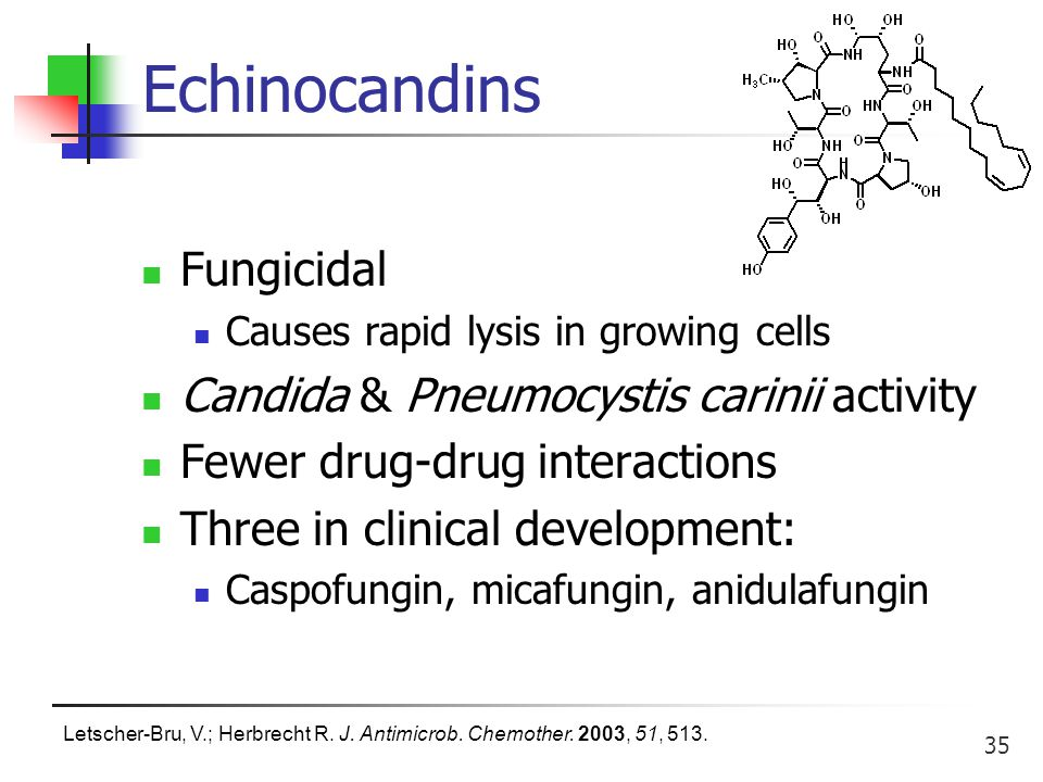 35 Echinocandins Fungicidal Causes rapid lysis in growing cells Candida & Pneumocystis carinii activity Fewer drug-drug interactions Three in clinical development: Caspofungin, micafungin, anidulafungin Letscher-Bru, V.; Herbrecht R.