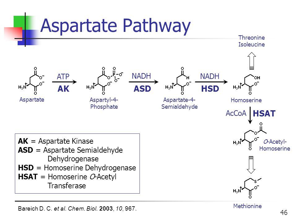 46 Aspartate Pathway Methionine Aspartate Aspartyl-4- Phosphate Aspartate-4- Semialdehyde Homoserine O-Acetyl- Homoserine ATP NADH AcCoA AKASDHSD HSAT AK = Aspartate Kinase ASD = Aspartate Semialdehyde Dehydrogenase HSD = Homoserine Dehydrogenase HSAT = Homoserine O-Acetyl Transferase Threonine Isoleucine Bareich D.