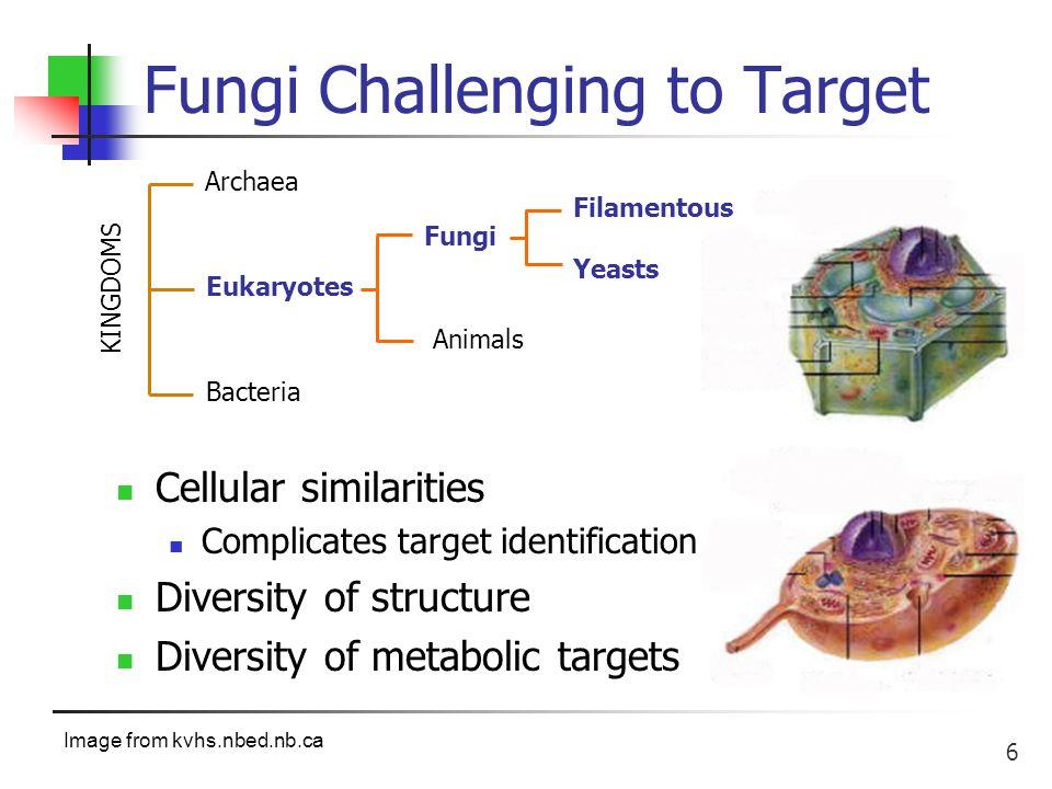 37 Sidechain SAR Study Too long: hemolytic in vitro Too short: no antifungal activity C log P > 3.5 = antifungal Debono J.