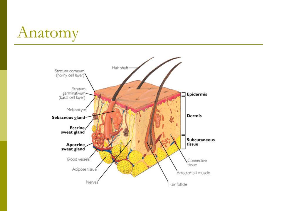 Famoso Anatomy And Physiology Of Cellulitis Colección - Anatomía de ...