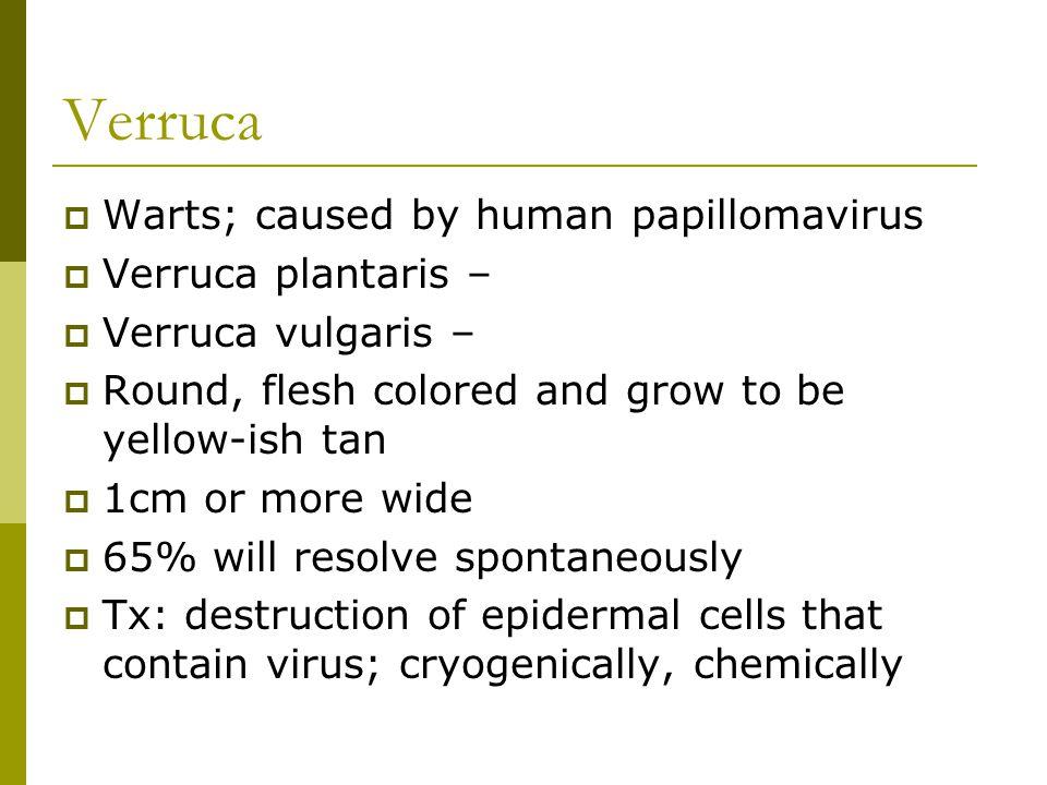  Warts; caused by human papillomavirus  Verruca plantaris –  Verruca vulgaris –  Round, flesh colored and grow to be yellow-ish tan  1cm or more