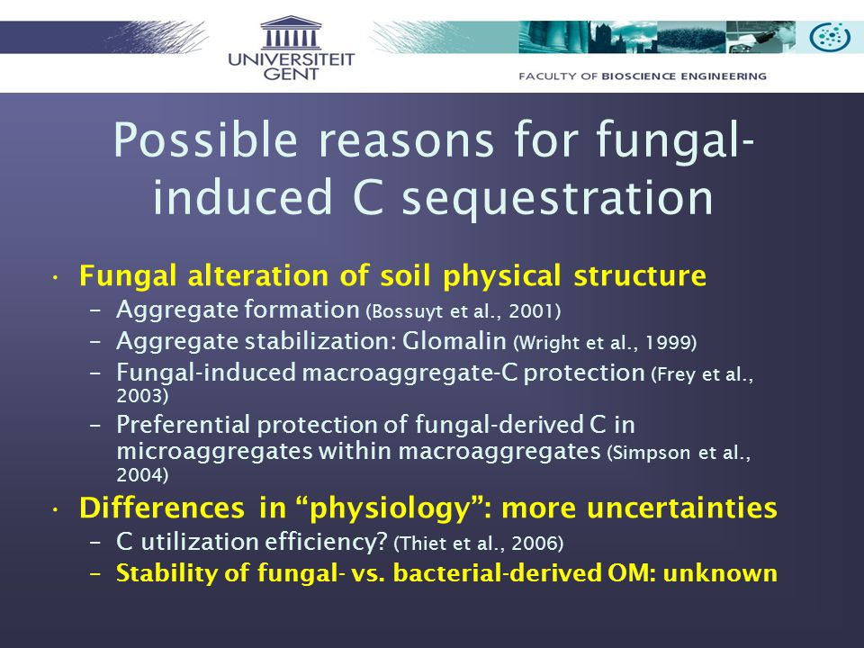 Possible reasons for fungal- induced C sequestration Fungal alteration of soil physical structure –Aggregate formation (Bossuyt et al., 2001) –Aggregate stabilization: Glomalin (Wright et al., 1999) –Fungal-induced macroaggregate-C protection (Frey et al., 2003) –Preferential protection of fungal-derived C in microaggregates within macroaggregates (Simpson et al., 2004) Differences in physiology : more uncertainties –C utilization efficiency.