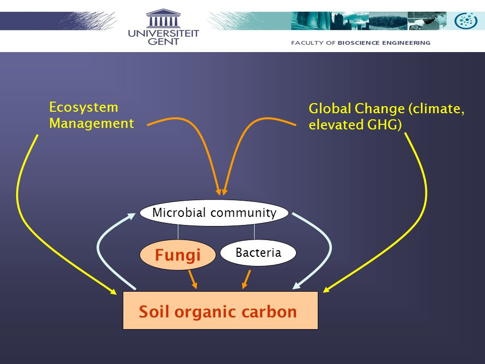 Soil organic carbon Ecosystem Management Global Change (climate, elevated GHG) Microbial community Fungi Bacteria